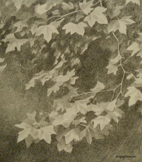 leaf patterns, drawing and painting foliage