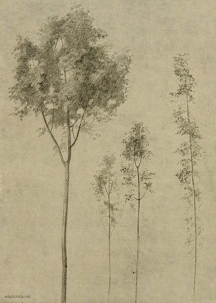 sketch of young trees