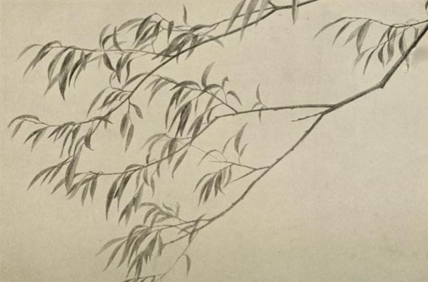 willow tree drawing, how to draw willow trees