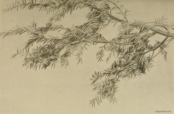 yew tree drawing, drawing and painting yew trees