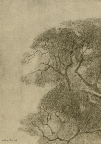 tree outlines, learn to illustrate trees
