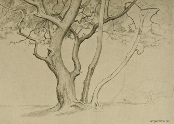 thorn stems, drawing trees, free art guide