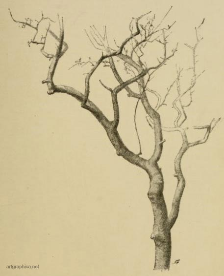 black thorn branches, tree art