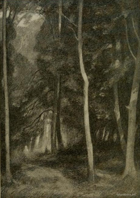 trees in crowded wood, how to draw a forest, drawing woods