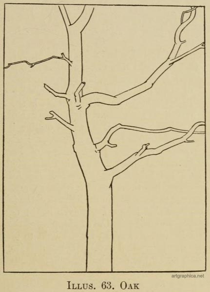 oak tree drawing, learn to draw oak trees