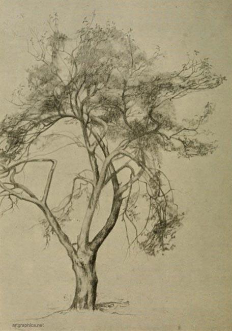 apple tree branch. BRANCH SYSTEM OF AN APPLE TREE