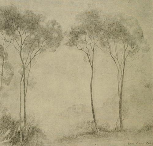 young ash trees, drawing ash trees, advance landscape tutorials