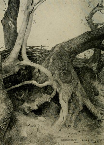 the anatomy of trees, how to draw trees, rex vicat cole, advanced drawing