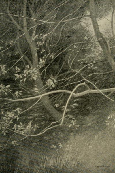 rex vicat cole, victorian art guide, drawing trees