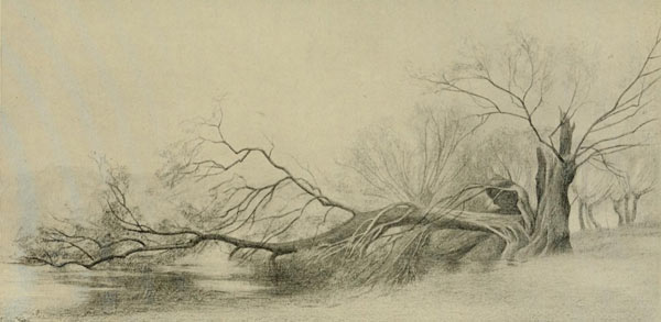 fallen willow tree, tree drawing, vicat cole, anatomy of trees