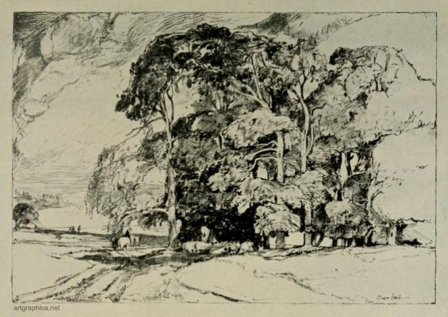 study of sycamore tree, oliver hall