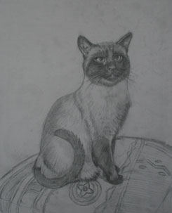 sketching a cat, cat sketch