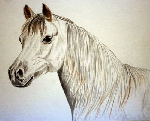 horse pictures to colour for kids. painting a horse, horse
