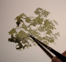 how to paint foliage, tree in watercolors