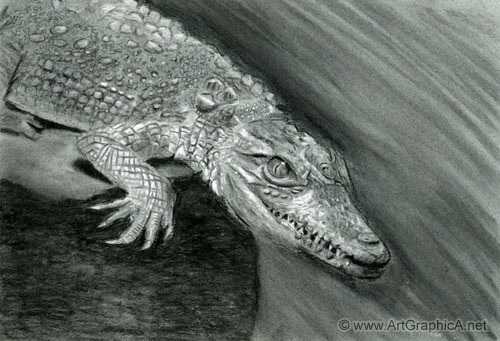 alligator drawing, charcoal chalk