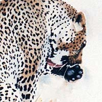 leopard painting, how to paint wildlife, watercolour lesson