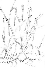 drawing grass