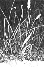 drawing realistic grass, landscape, free art lesson