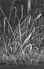 grass, negative drawing lesson