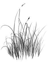 drawing blades of grass