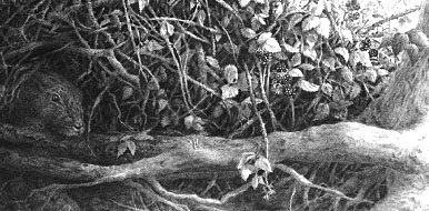 drawing brambles and roots