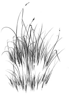 negative drawing, photorealism, grass