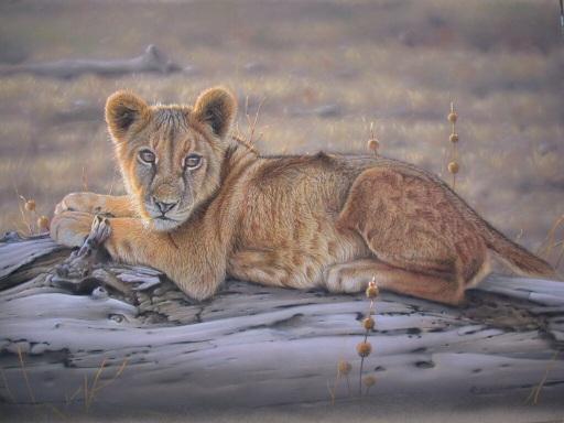 pastel demonstração pintura, pastel vida selvagem tutorial, instrução arte dos animais selvagens, pintura de pele, filhote de leão, pastel demonstração animais selvagens, pintura com pastéis