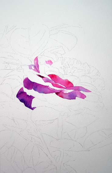 rose painting, free watercolor instruction, how to paint roses