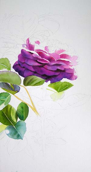 watercolor demo, how to paint a rose, heidi klum rose