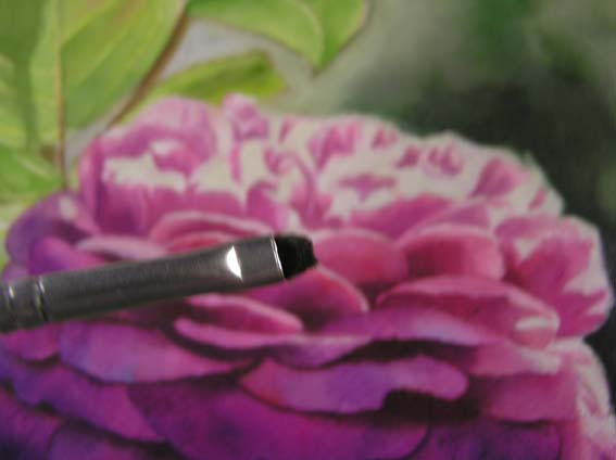 watercolor rose tutorial, free watercolor instruction, art instruction