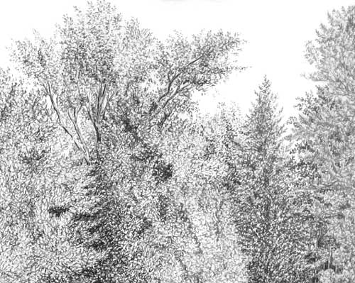 detailed tree drawing, create tree foliage, pen and ink instruction