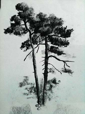 how to draw pine trees, charcoal demo