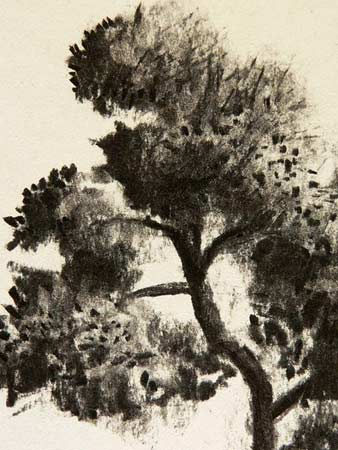 pine needles, charcoal art demonstration