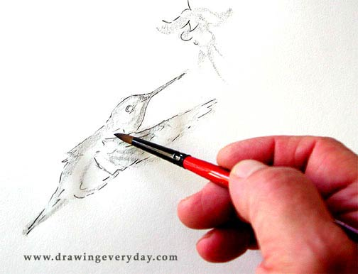 bird sketching lesson, learn to sketch, dampen paper