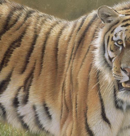 arte tigre realista