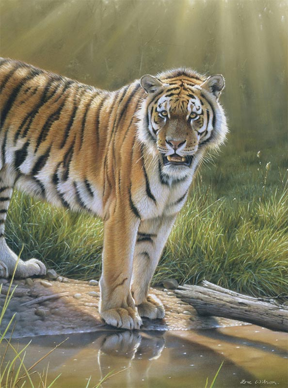 pintura do tigre, photorealism