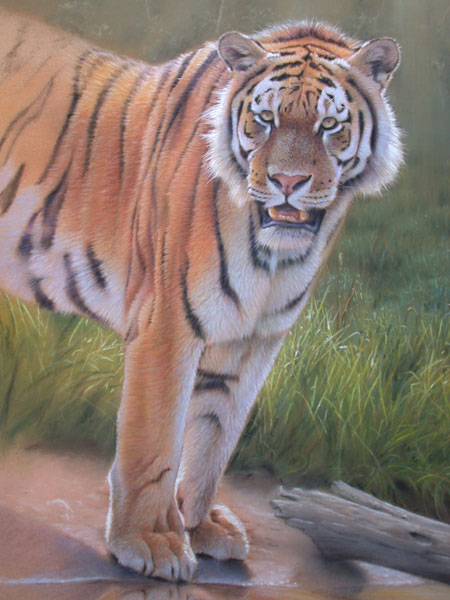 tiger art, painting with pastel