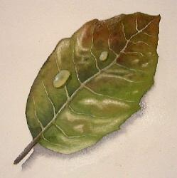 learn to paint leaves, watercolor demo