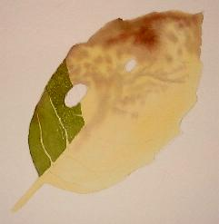 painting tree leaves, watercolor tutorial