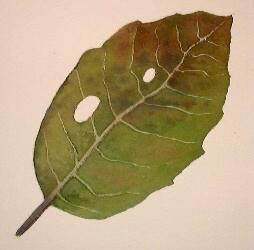 painting a tree leaf, watercolor art demonstration