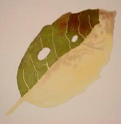 learn to paint leaves