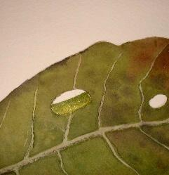 how to paint leaf, rain drop, watercolor how to