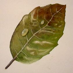 leaf art, painting leaves, watercolor instruction