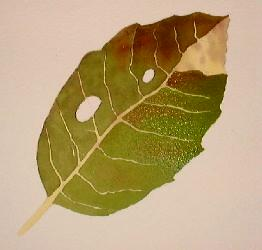 how to paint leaves, watercolor art demo