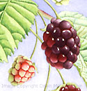 painting nature, watercolor underpainting, blackberries, watercolor art instruction