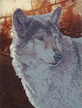 wolf painting tutorial, acrylic art instruction, acrylic painting  instruction, wolf, free wildlife art